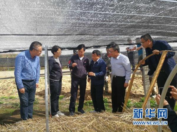 中国工程院院士朱有勇点赞康美人参种植新模式